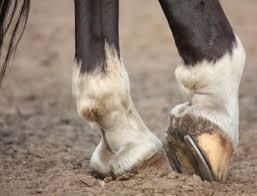 دعای نعل اسب